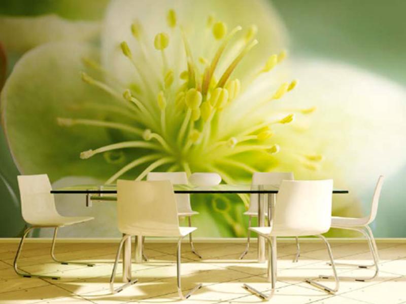 Фотообои с крупным цветком для кухни